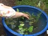 Déco Brico Jardinage : Faire un bassin à poissons pour jardin