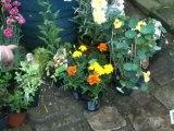 Déco Brico Jardinage : Soigner une plante avec une autre