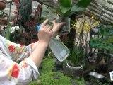 Déco Brico Jardinage : Entretien d'une Orchidée