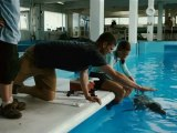 Dolphin Tale - Exclusive Interview With Harry Connick Jr, Nathan Gamble And Cozi Zuehlsdorff