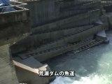 日本初のダム撤去へ!~熊本県・荒瀬ダム OurPlanetTV