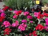 22ème Marché aux fleurs d'Epernay