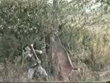 Ce matin, un lapin, a tue un chasseur!!!