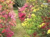 Au pays des Rhododendrons... (Gouesnach)