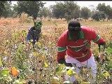 AFRICA NEWS ROOM du 21/05/12 - Côte d'ivoire - Agriculture le secteur du cacao - partie 1