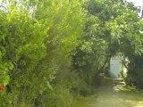 ORPI Saint Yves Location Saisonnière - Maison à Saint Clément des Baleines (île de Ré)