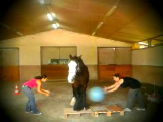Horse Volley Ball !