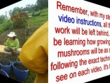 growing mushrooms kits - home growing mushrooms - magic mushroom kits