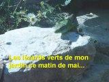 Les lézards verts de mon jardin ce matin de mai par Leïla Estellon