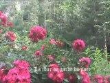 Eden Parc, le Jardin d'Eden à Tournon ( mai 2012)