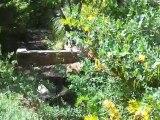 Jardin méditerranéen : bordures iris et bulbineas et bassin de jardin en pierres ou massif 4 saisons