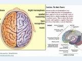 understanding EEG Part1, What is electroencephalography (EEG)?
