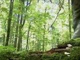 Bialowieza primeval forest part 1