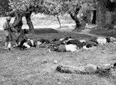 Κοντομαρί Χανίων ~ Η πρώτη εκτέλεση αμάχων στην Ευρώπη - Η μηχανή του χρόνου