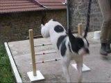Cours de saut Murphy du 5 juin 2012