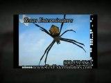 713.868.5518 'Pest Control Texas' Houston Exterminators, Houston Pest Control Exterminator
