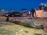 Ritrovato un delfino morto a San Leone News AgrigentoTV