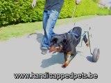 chariot pour chien paralysé