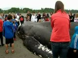 Dead beached whale draws crowds in Canada
