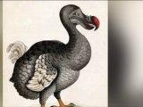 La véritable histoire du Dodo