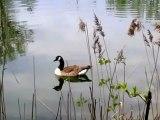 A1-B1 Textproduktion Umwelt und Natur