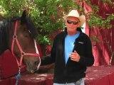 Horseback Riding Ottawa - What is horseback trail riding?