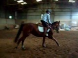 Sambo mon cheval réformé de course de trot