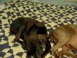 Un chien sent un pet !