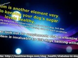 Pet Diabetes Supplements to Help in Controlling Canine Diabetes