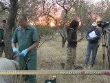 Rhino De-horning, Hoedspruit HD - South Africa Travel Channel 24 - Wildlife