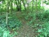 Macabres découvertes au Vincennes Bois de Vincennes restes humains avec un second tronc humain découvert jambes