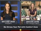 How to Spend Wisely When Pampering Pets
