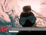 Top 5 : de l'immersion chez les requins aux athlètes olympiques précoces