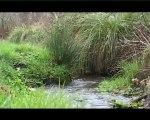 Recensement participatif des cours d'eau - Sage Blavet (Morbihan)