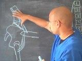 Quiropractico Atlanta / Gainesville GA - Estire Este Musculo Para Aliviar el Dolor de Espalda Baja - Quiropractico Gainesville GA