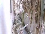 Syria فري برس  حمص الدمار داخل منازل المدنيين في حي الخالدية بحمص بسبب القصف العشوائي 24 6 2012 Homs