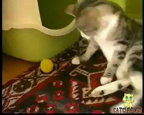 CatCuddles Profile - Gandalf