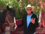 Horseback Riding Ottawa - How do I control my horse while horseback riding?