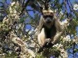Mission de volontariat Réhabilitation des primates en Argentine : émission d'Ushuaïa TV