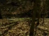 In The Woods - Extrait In The Woods (Anglais)