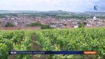 Une famille de vignerons raconte son histoire