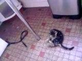 petit chaton qui fait déliré