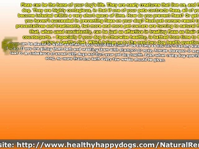 Dog Health Care Tips – Commonly Asked Dog Health Questions