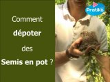Comment dépoter des semis en pot ?