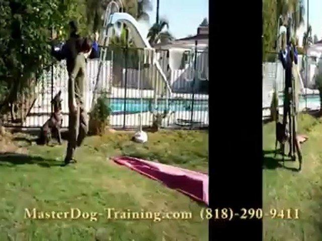 Protection Dog Training  –  Security Dog Training – K9 Dog Training