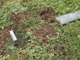 40 tombes de soldats allemands profanées près de Reims