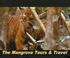 Sundarbans Tiger-Visit the Sundarban with Us The Mangrove Tours & Travel.