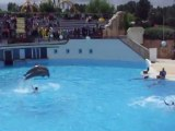 Spectacle de dauphins au Parc Asterix