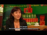 Tiềm năng Việt Nam: Phát triển vùng nguyên liệu chè vùng núi và trung du phía Bắc