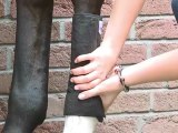 How to apply bandages to a horse